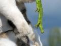 Funniest animal fails ever