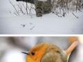 Artist turns animals into AniCubes
