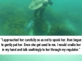 Shark swims up to diver for a cuddle