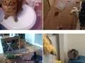Cats that just don�t F**KING care
