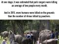 To protect rhinos, Kaziranga National Park just shoots people