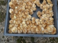 1,000 tiny chicks dumped in a field left to die