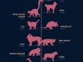 Animal lifespan chart