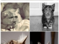 Cats with Nicolas Cage�s face