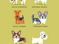 Different kinds of dogs in the world