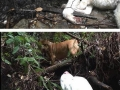 Man rescues blind dog who'd been missing
