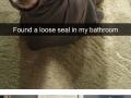 Animal snapchats