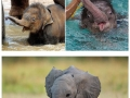 Baby elephants that'll make you smile