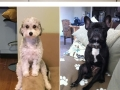 Dogs that can�t figure out how to sit