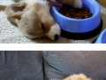 Sweet puppies who take the art of Sleep-Fu to a whole new level