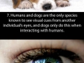 Facts about the eyes