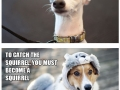 What dogs are really thinking about