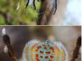 Bizarre spiders species
