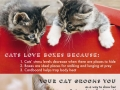 Something you probably didn�t know about cats