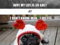 This sad pug will make you smile
