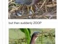 Long birdo is weird