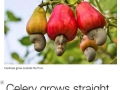 You never thought about how these foods grow