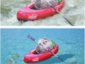 Cute hedgehog on kayak triggers a glorious photoshop battle