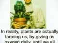 Plants are actually farming us