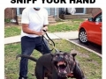 Every dog owner be like this